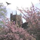 Blossom time at St Mary's